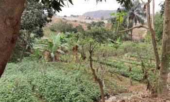 Du 04 au 12 septembre 2020 : Suivi des activités du projet CIVSAM au Kongo Central